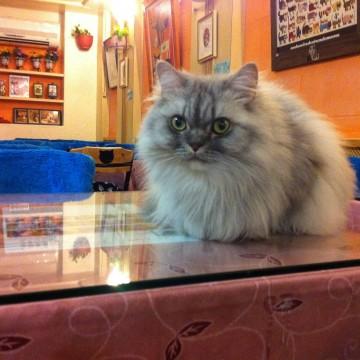 灰猫屋内の猫画像