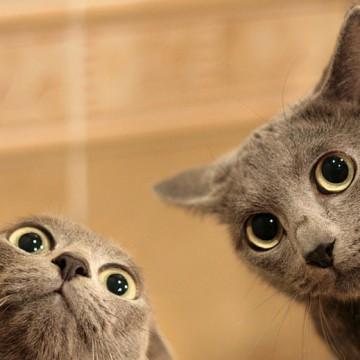 灰猫子猫の猫画像