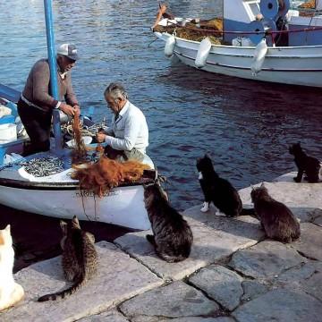茶トラ白猫キジトラ猫黒猫ハチワレ猫キジトラ白猫港の猫画像