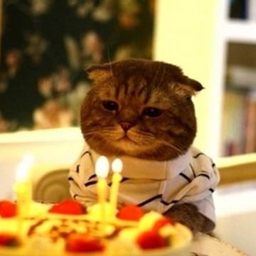 キジトラ猫誕生日の猫画像