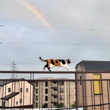 三毛猫屋外虹の猫画像