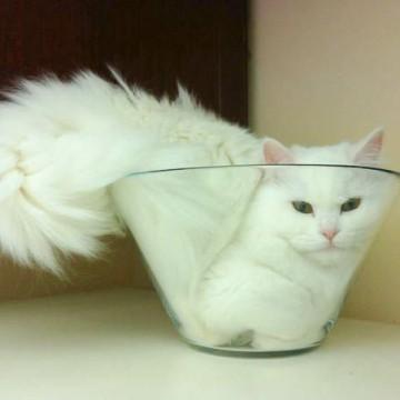 白猫器の猫画像