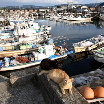 茶トラ猫港の猫画像