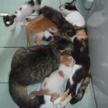 キジトラ猫茶トラ白猫三毛猫黒白猫子猫の猫画像