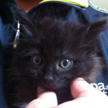 黒猫子猫手の猫画像