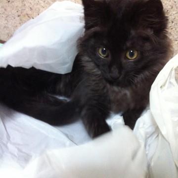 黒猫子猫布団の猫画像