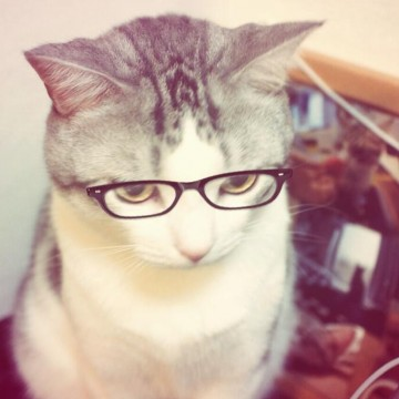 サバトラ白猫メガネの猫画像