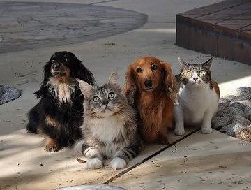 キジトラ猫三毛猫犬屋外の猫画像