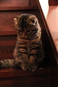キジトラ猫子猫階段の猫画像