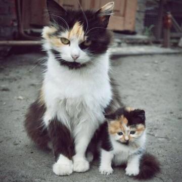 三毛猫子猫親子の猫画像