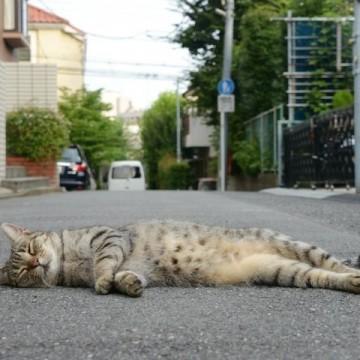 キジトラ猫昼寝道路の猫画像