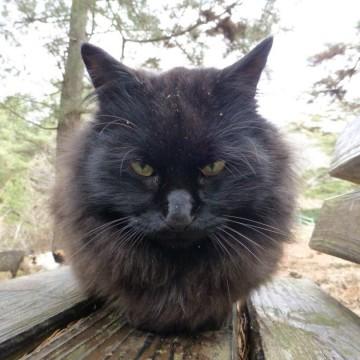 黒猫ベンチの猫画像