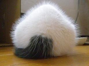 黒白猫屋内の猫画像