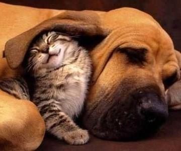 キジトラ猫子猫犬の猫画像