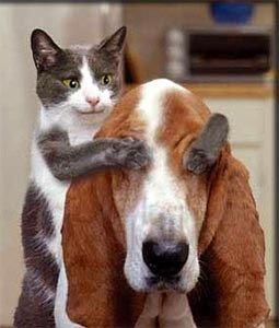 灰白猫犬の猫画像
