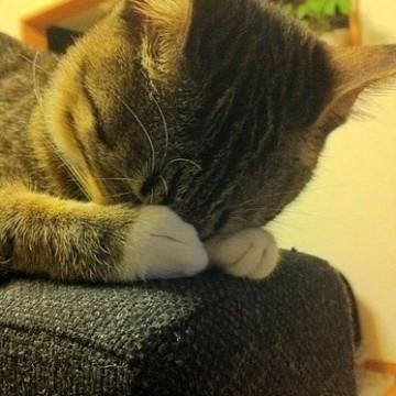 キジトラ猫子猫昼寝の猫画像