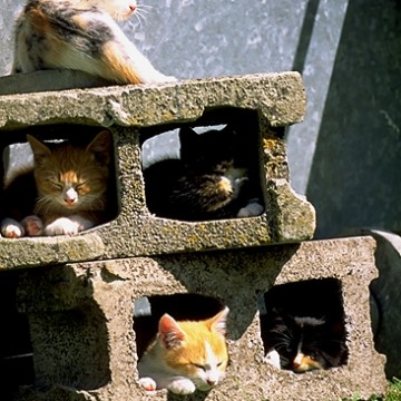 三毛猫茶トラ白猫キジトラ猫屋外の猫画像