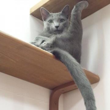 灰猫棚の猫画像