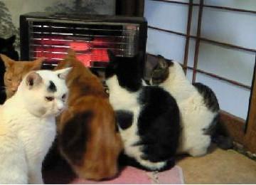 黒白猫茶トラ猫サバトラ白猫黒猫ストーブの猫画像
