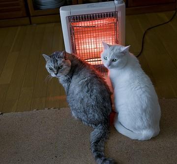サバトラ猫白猫ストーブの猫画像