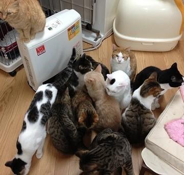キジトラ猫白黒猫茶トラ白猫ハチワレ猫茶トラ猫ストーブの猫画像