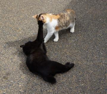三毛猫黒猫屋外の猫画像