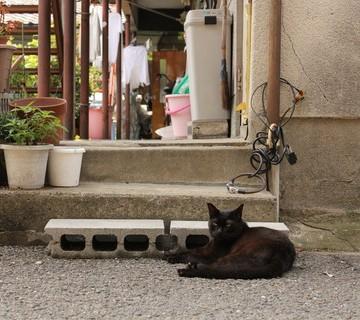 黒猫屋外の猫画像