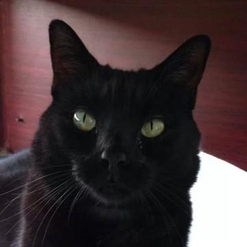 黒猫屋内の猫画像