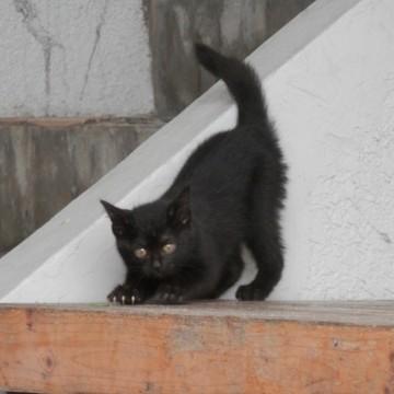 黒猫子猫屋外の猫画像
