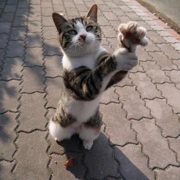 キジトラ白猫子猫レンガの猫画像