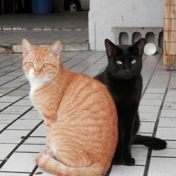 茶トラ白猫黒猫屋外の猫画像