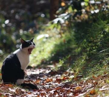 ハチワレ猫屋外の猫画像