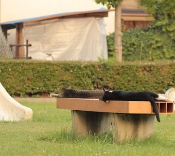 黒猫キジトラ猫公園の猫画像