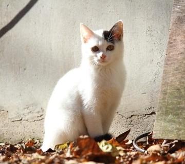 黒白猫屋外の猫画像