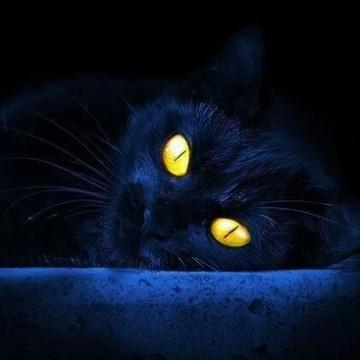 黒猫の猫画像