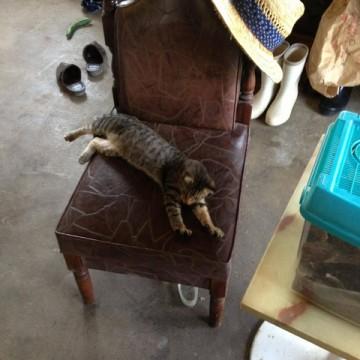 キジトラ猫子猫椅子の猫画像