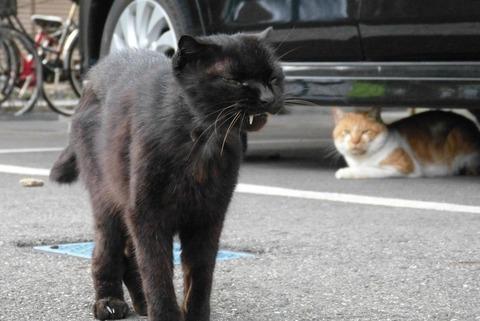 黒猫茶トラ白猫屋外の猫画像