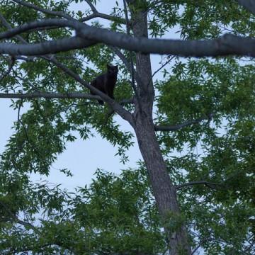 黒猫木の猫画像