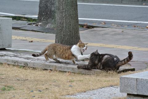 キジトラ白猫キジトラ猫喧嘩の猫画像
