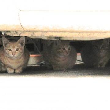 茶トラ猫屋外の猫画像