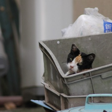 三毛猫屋外ケースの猫画像
