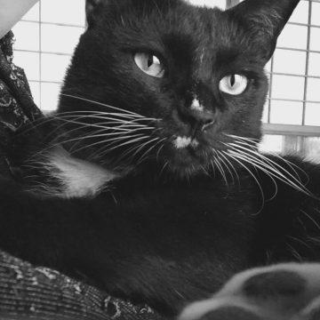 黒猫アップの猫画像