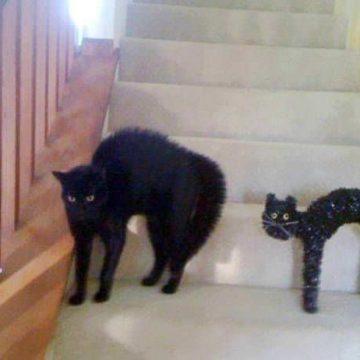黒猫人形の猫画像