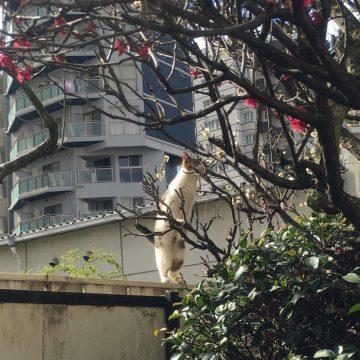 サバトラ白猫庭の猫画像