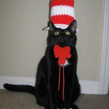 黒猫防止の猫画像