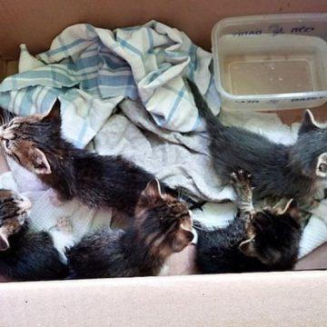 キジトラ子猫たくさんの猫画像