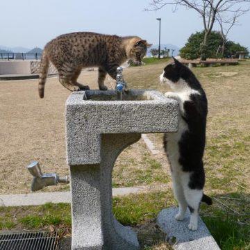 キジトラハチワレの猫画像