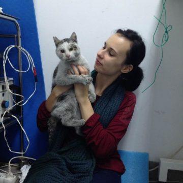 野良猫保護の猫画像