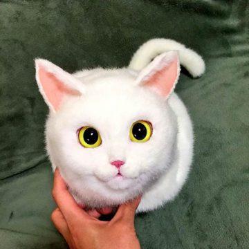 白猫おめめまん丸の猫画像