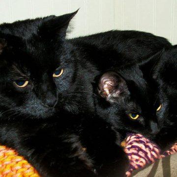 黒猫親子の猫画像
